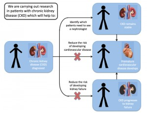 Chronic Kidney Disease (CKD) Research
